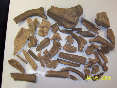 Fragments of large unspecified animal bones